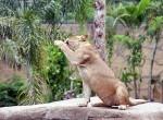 Bali-Zoo26-150x110