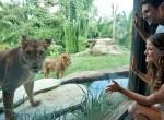 Bali-Zoo9-150x110