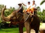 bakas-elephant1-150x110