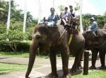 bakas-elephant2-150x110