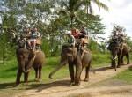 bakas-elephant3-150x110