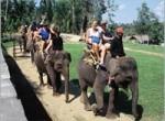 bakas-elephant4-150x110