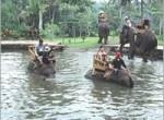 bakas-elephant6-150x110